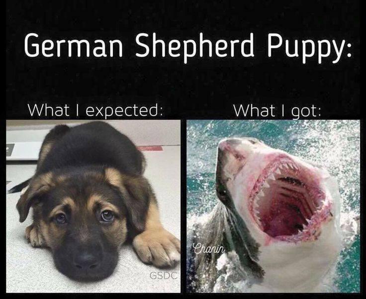 Puppies are horrible.-30415334_10209356286978802_271212100817256448_n.jpg