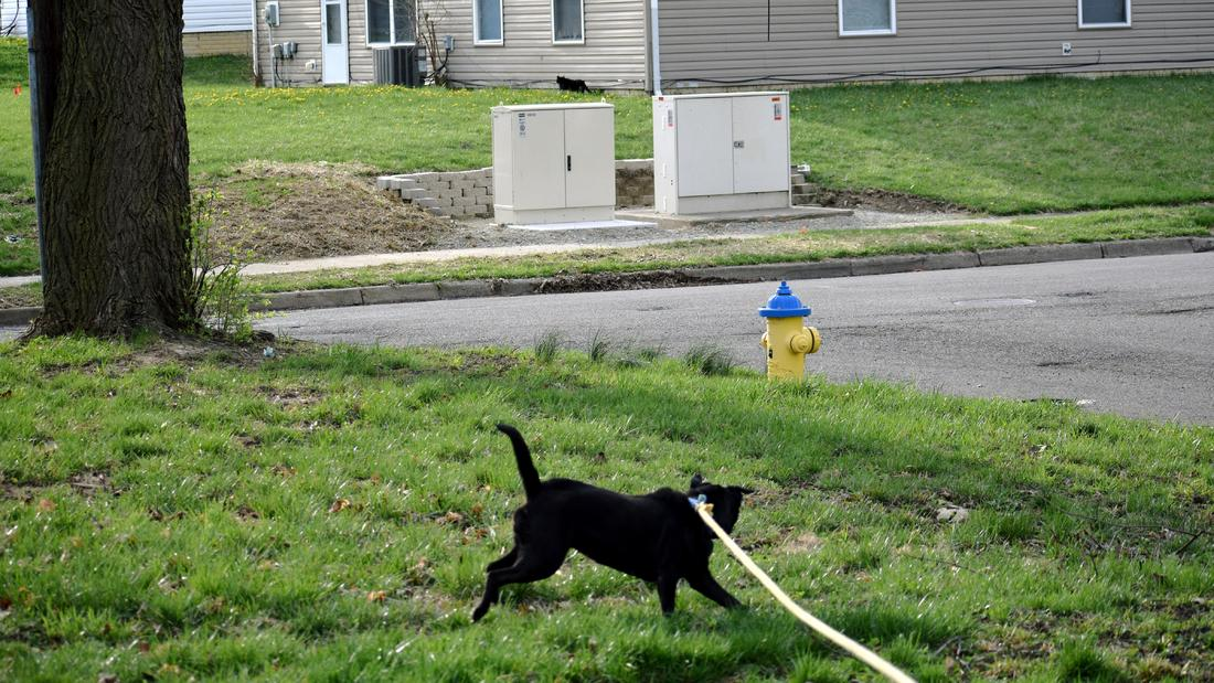 Oh Crap...-animal-dog-kage-dsc_3044-04122019-.jpg