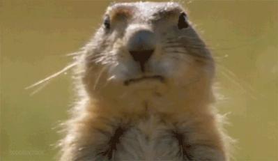 Freakout Friday: Post Random, Stupid Sh**.-bubblegumsquirrel.jpg