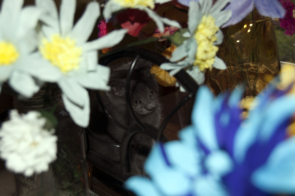 another to be named later.-day2flowerhidess.jpg