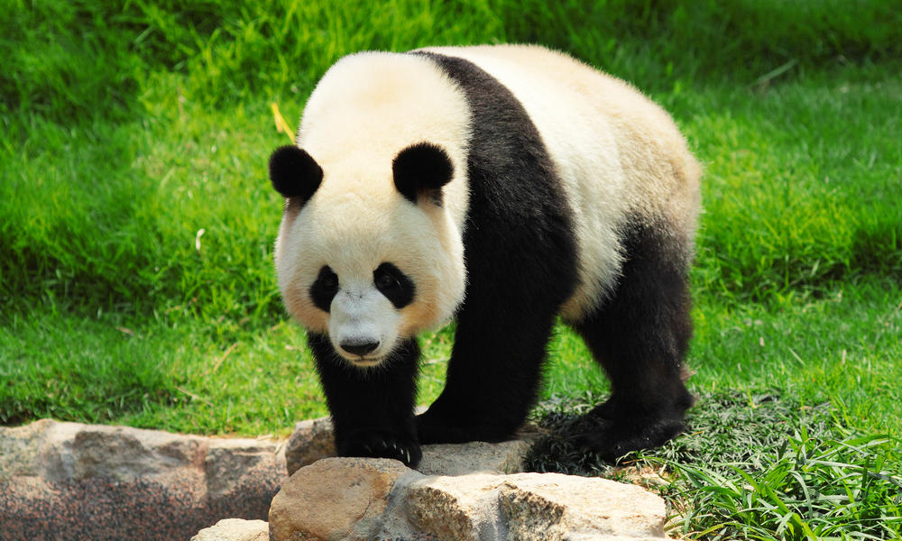 What to Lubricant the wheel bears with?-giant-panda.jpg