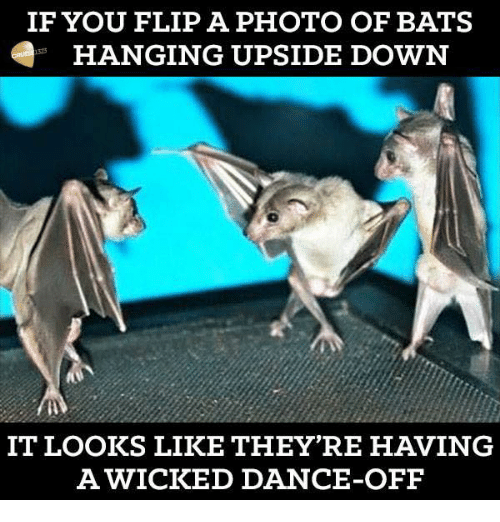 Second Bat In Two Weeks-if-you-flip-photo-bats-hanging-upside-down-6066405.png