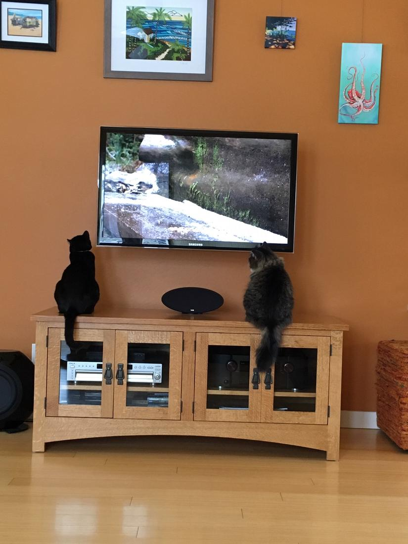 videos for cats are very popular.-img_8308.jpg