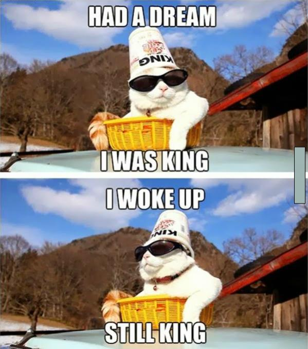 Freakout Friday: Post Random, Stupid Sh**.-lolcats-king-dream.jpg