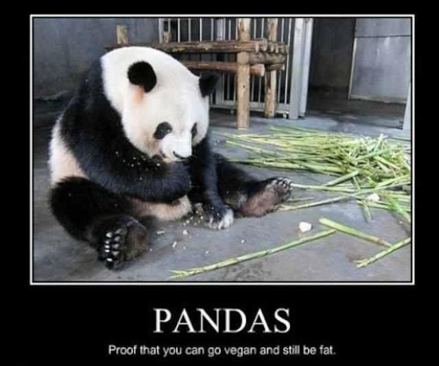 Freakout Friday: Post Random, Stupid Sh**.-pandas.jpg