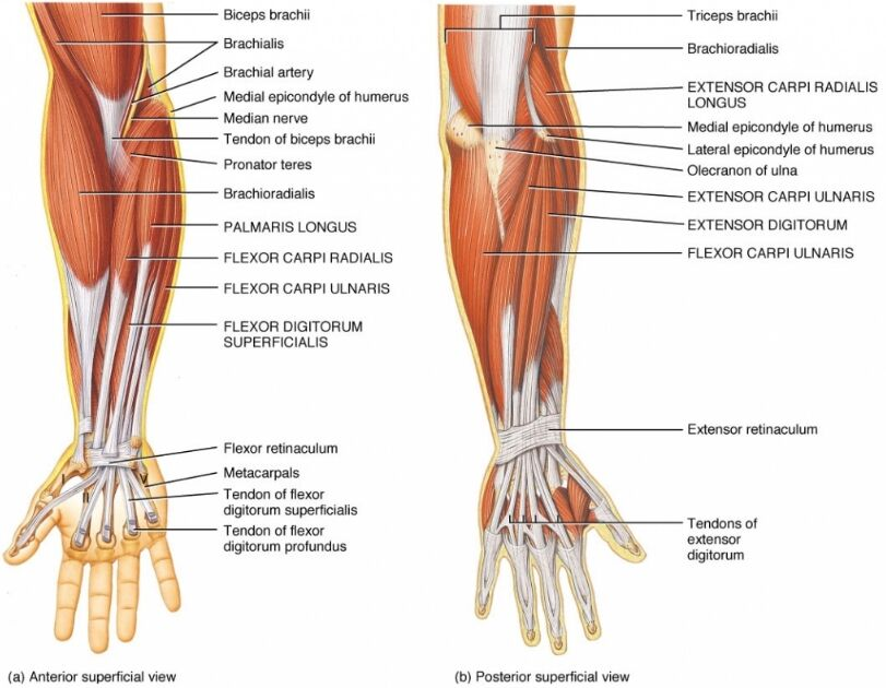 Forearm And Bicep Pain