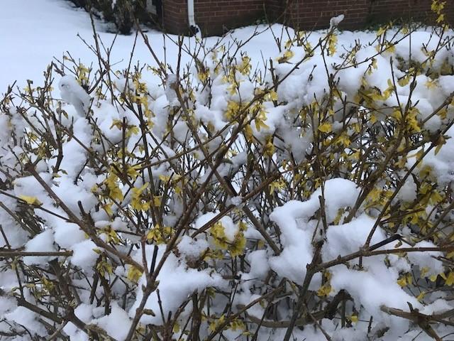 C'mon spring-spring1.jpg