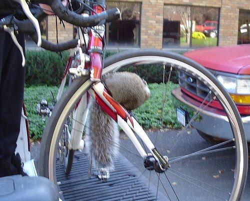 Bike Damage