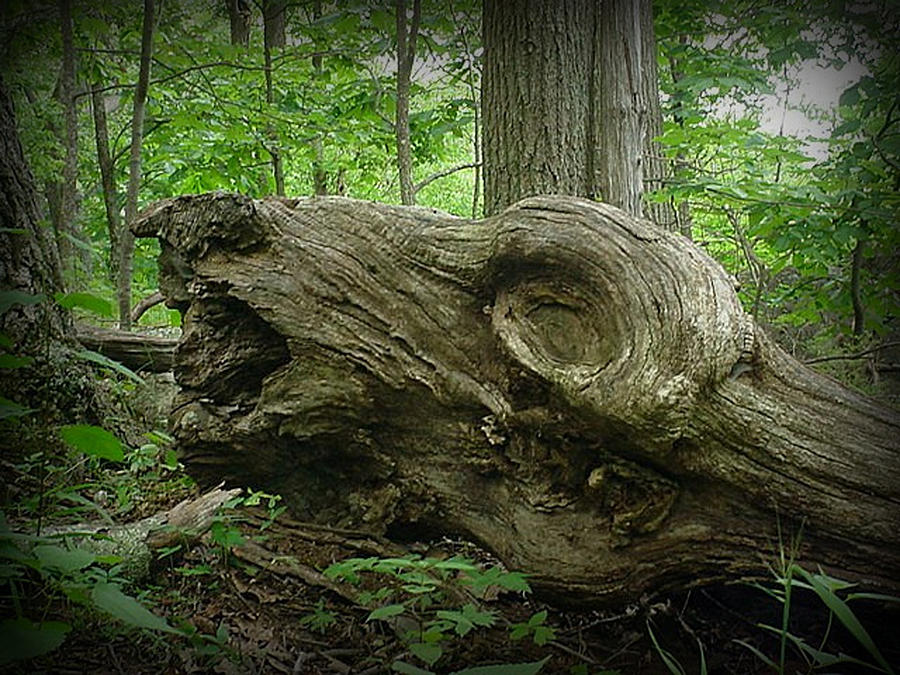 -tree-monster-elisia-cosentino.jpg