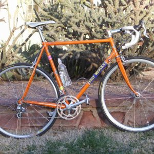 MX Leader-Molteni Orange